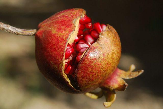 granada vitaminas fruta roja