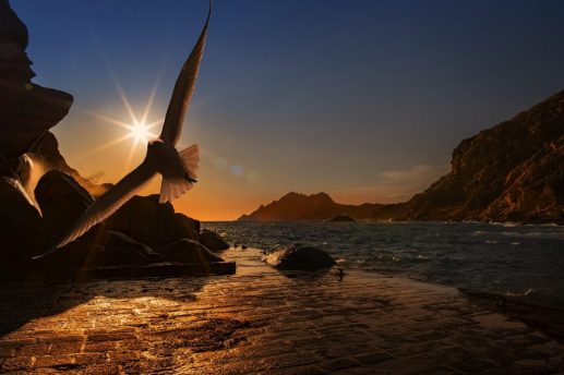 volare ucello libertà tramonto COME FAR SPARIRE LA PAURA