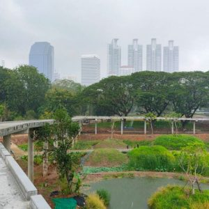 Greenery little forest amid vibrant city of Bangkok, Thailand