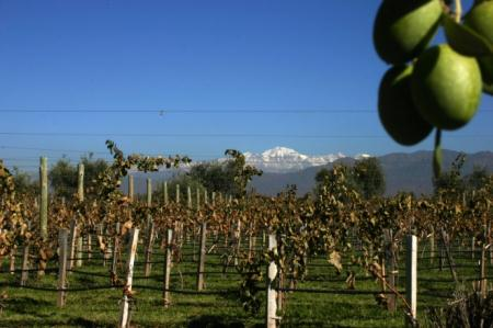 Wine region outside Mendoza