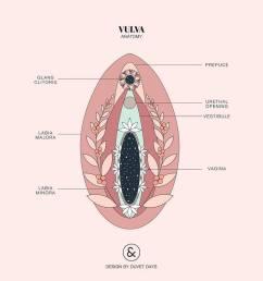 vulva  [ 960 x 960 Pixel ]