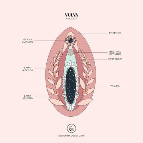 small resolution of vulva