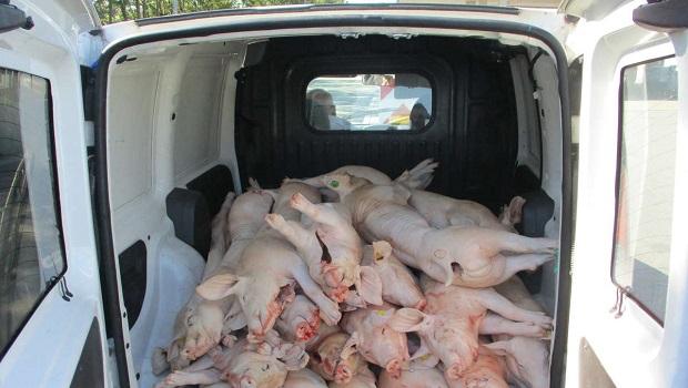 Photo of IMALI SU ŠTA DA VIDE: Petrovčanin, iz Holandije u Beč u kombiju prevozio 33 zaklane svinje
