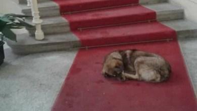 Photo of PSEĆA MAFIJA SA BALKANA: Od prodaje pasa iz Srbije u Nemačkoj vrti milijarde evra (VIDEO)