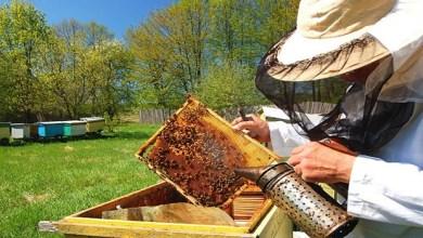 Photo of POČELA UPLATA: Članarina za pčelare 1.500 dinara