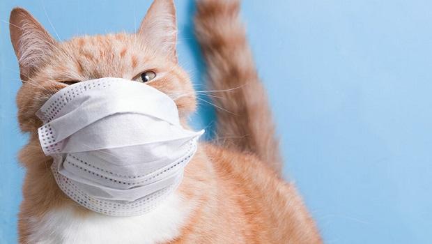 Photo of NAJNOVIJE OTKRIĆE NAUČNIKA: Mačke su direktni prenosioci virusa korone
