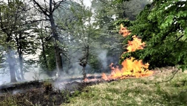 Photo of GORELO 10 HEKTARA: Uspešno lokalizovan požar kod Golupca (VIDEO)