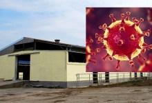 Photo of LEGLO KORONE: Veliki broj radnika zaraženo virusom COVID-19 u farmi svinja kod Velikog Gradišta!?