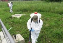 Photo of DERATIZACIJA: U Velikom Gradištu i na Srebrnom jezeru počela borba sa glodarima, krpeljima i ambrozijom