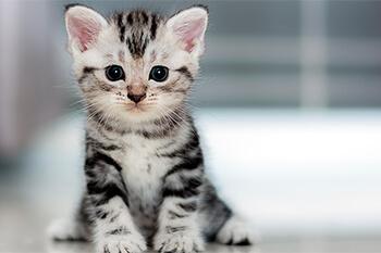 Las 5 personalidades de los gatos