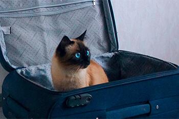 Qué hacer con tu gato en vacaciones