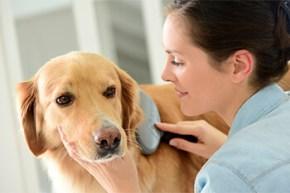 Cómo limpiar a tu perro sin bañarlo
