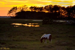 Chincoteague Sunset