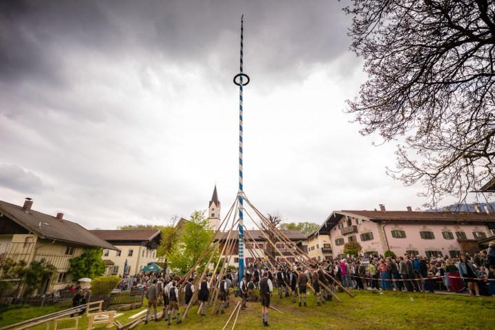 Maibaum-Altenbeuern-1009355