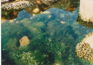 Submerged - full picture