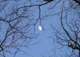 One more moon branch