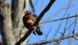 Windy Robin