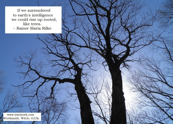 Witchy picture - Rilke tree quote