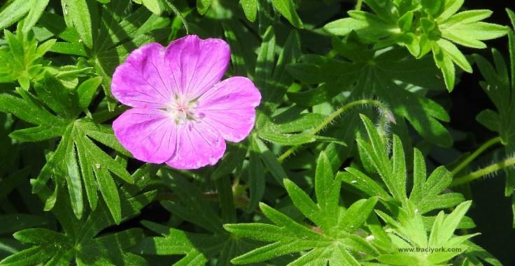 Foto Friday 14 Pink Flower