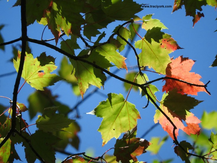 Green and red leaves