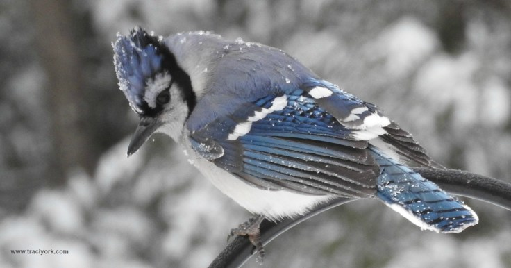 Frosty Feathered Friends Flashback Foto Friday