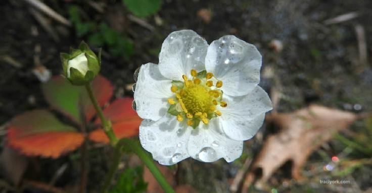 Bugs, Raindrops, and Flowers