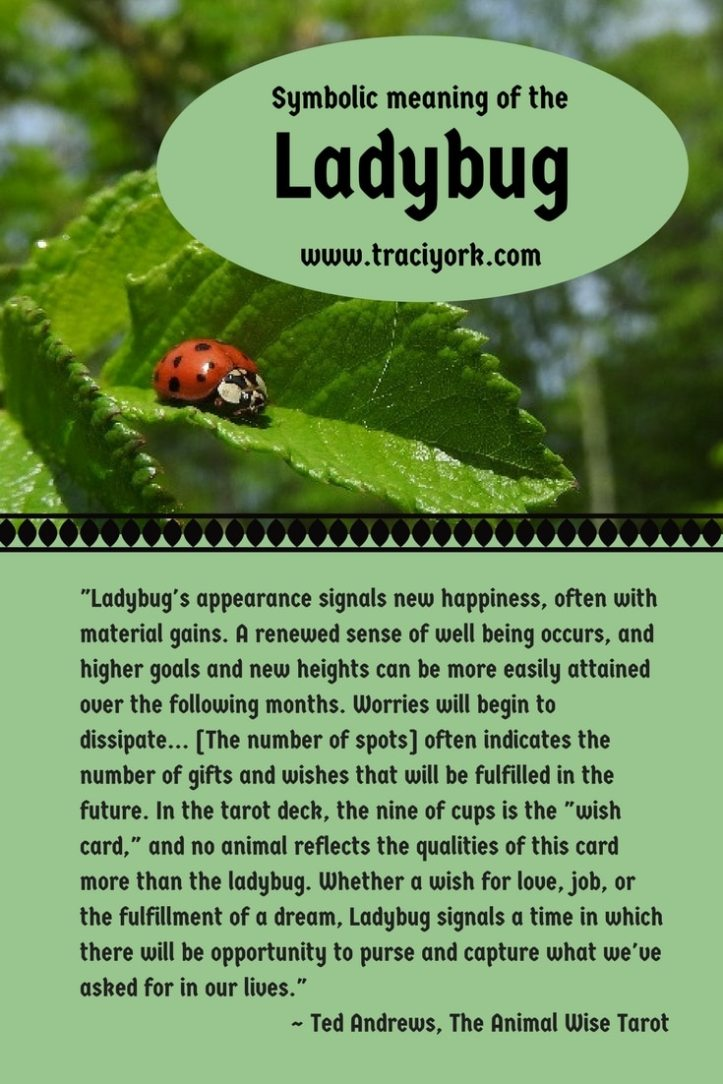Witch Quote Challenge Week 3 Ladybug symbolic meaning by Ted Andrews