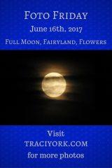 Full Moon, Fairyland, Flowers