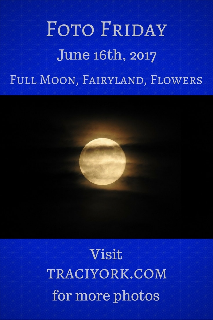 Full Moon, Fairyland, Flowers