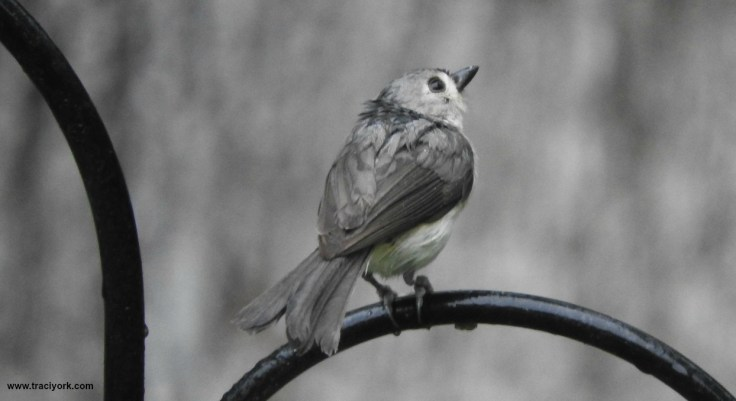 Raindrops, Moon, Birds
