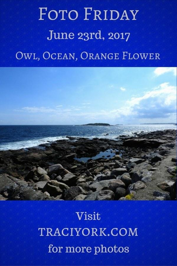 Owl, Ocean, Orange Flower blog graphic