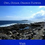 Owl, Ocean, Orange Flower blog graphic