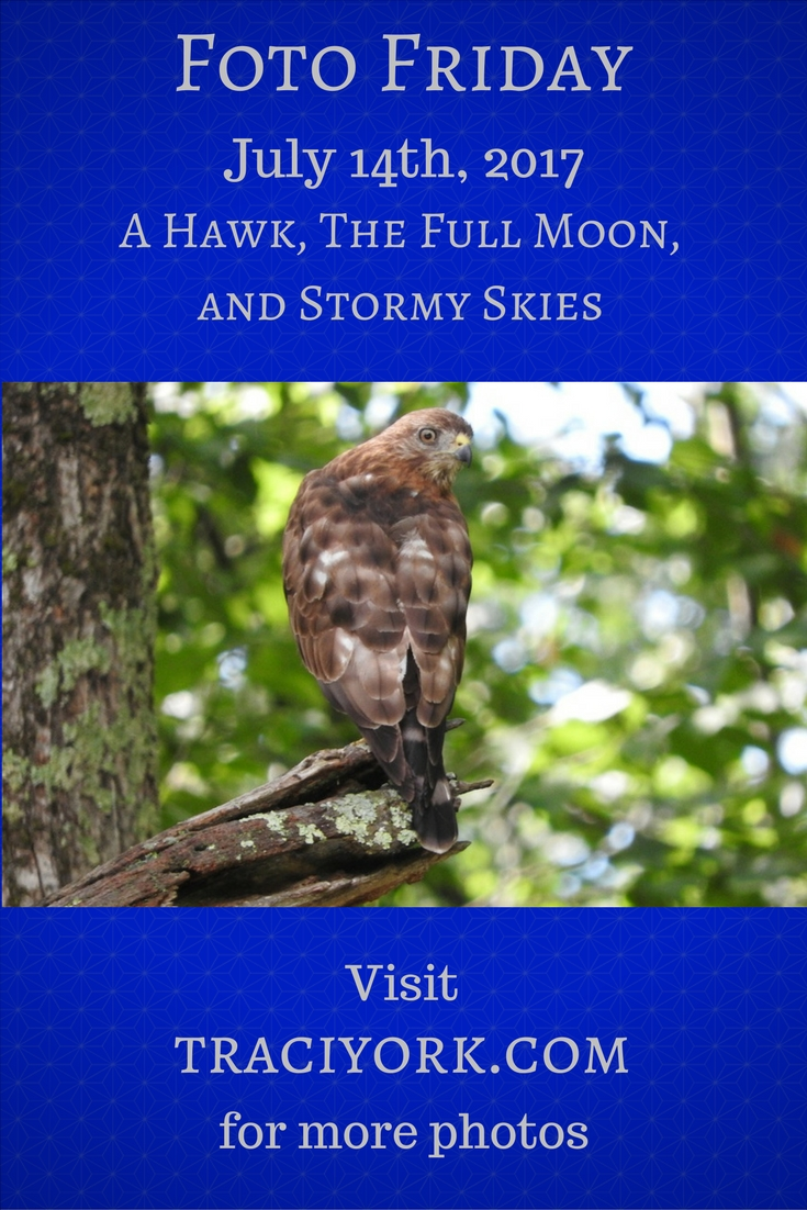 A Hawk, The Full Moon, and Stormy Skies Blog graphic
