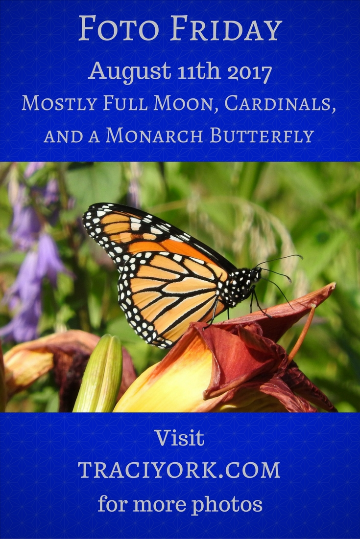 Foto Friday for August 11th Mostly Full Moon, Cardinals, and a Monarch Butterfly blog graphic