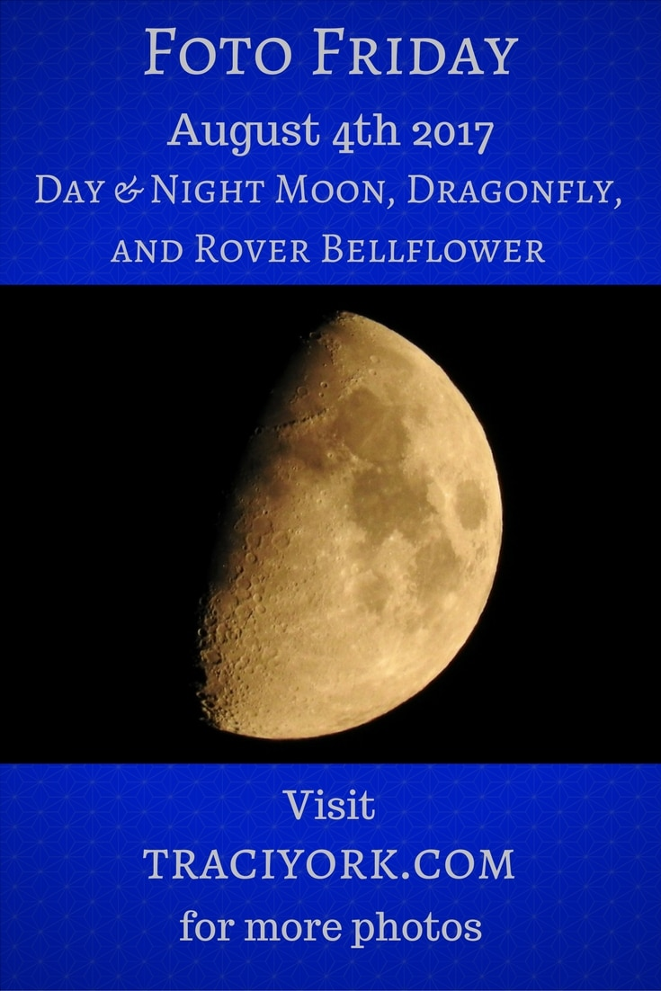 Day and Night Moon, Dragonfly, and Rover Bellflower blog graphic