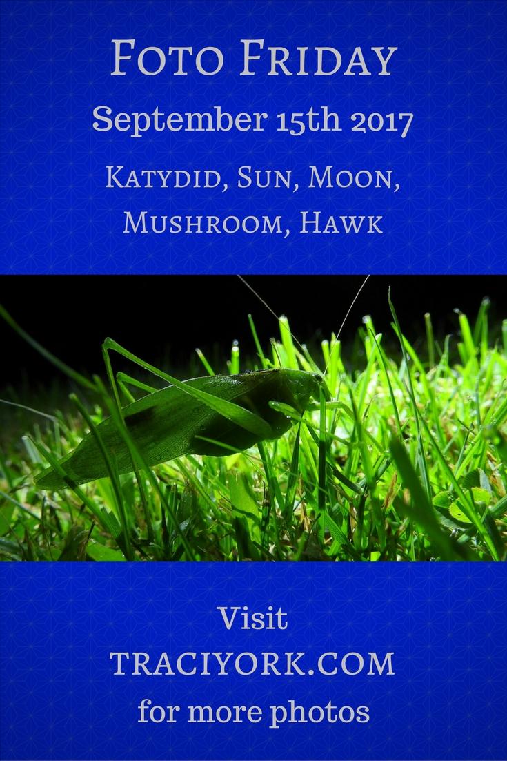 Katydid, Sun, Moon, Mushroom, Hawk – Foto Friday September 15 2017 - Traci York