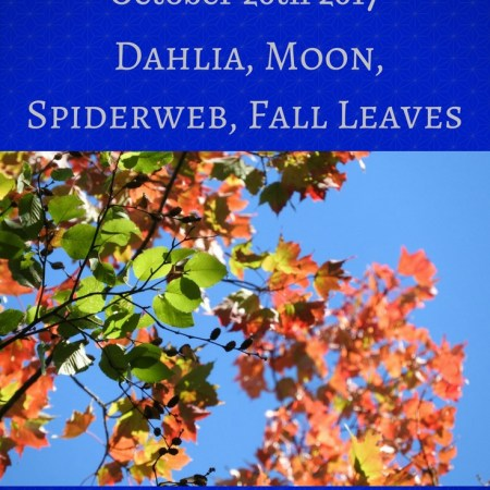 Dahlia, Moon, Spiderweb, Fall Leaves