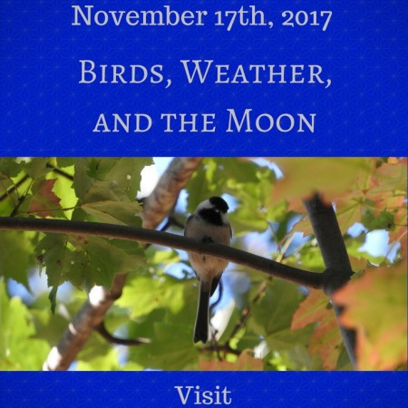 Birds, Weather, and the Moon