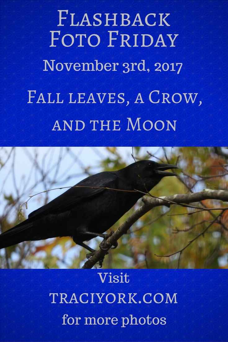 Fall leaves, a Crow, and the Moon