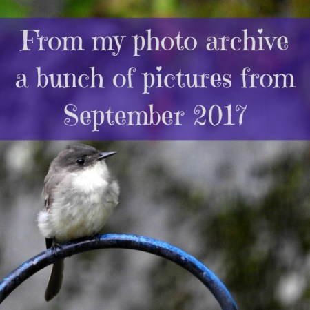 pictures from September 2017