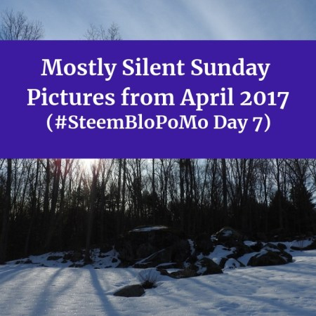 Mostly Silent Sunday Pictures from April 2017 #SteemBloPoMo Day 7
