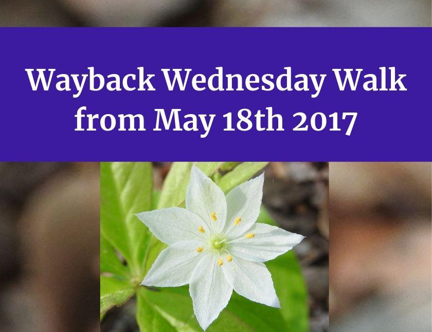 Wayback Wednesday Walk from May 18th 2017 blog thumbnail