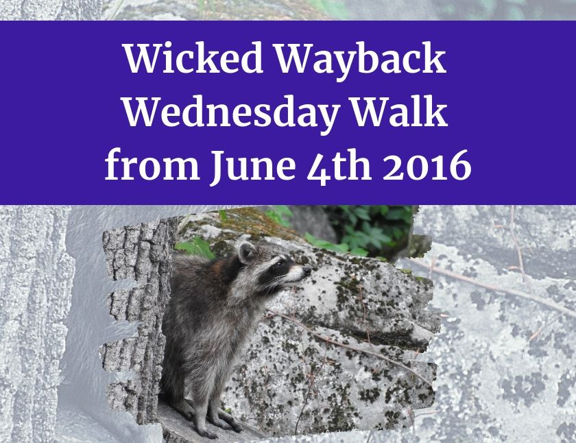 Wicked Wayback Wednesday Walk from June 4th 2016 blog thumbnail