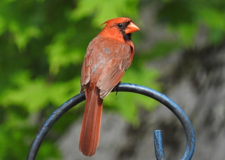 12 Cardinal