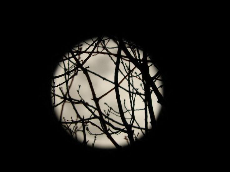 12 Full Snow Moon Photos from February 19 2019