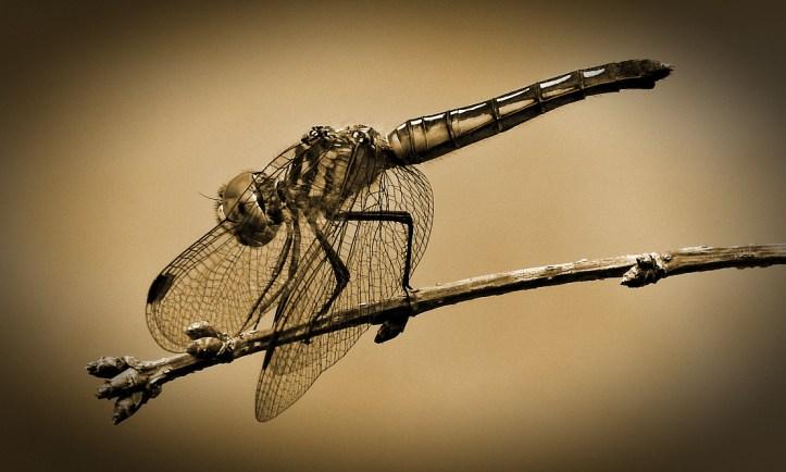 Five Nature Shots