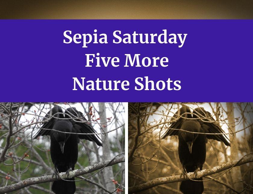 Sepia Saturday Five More Nature Shots blog thumbnail