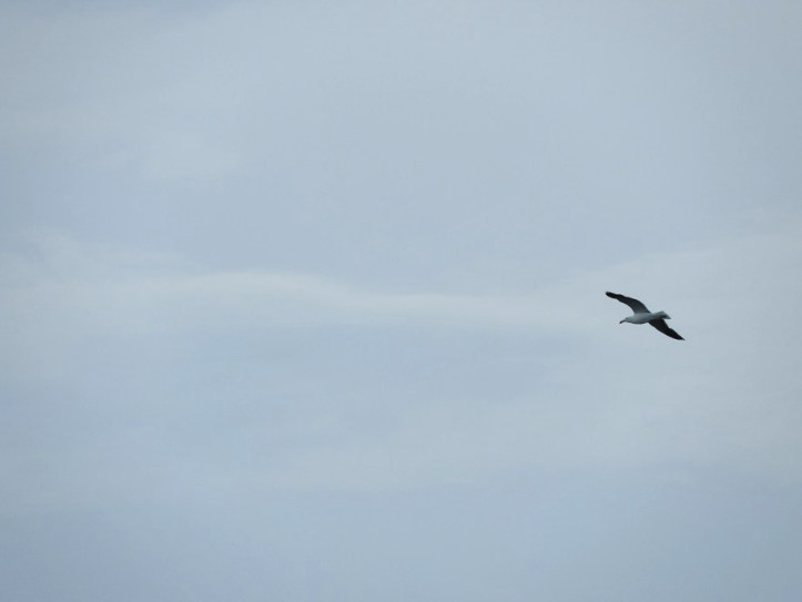 Seagulls from June 19th