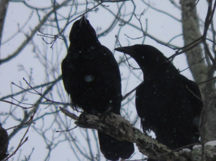 Dreamy Crow Couple