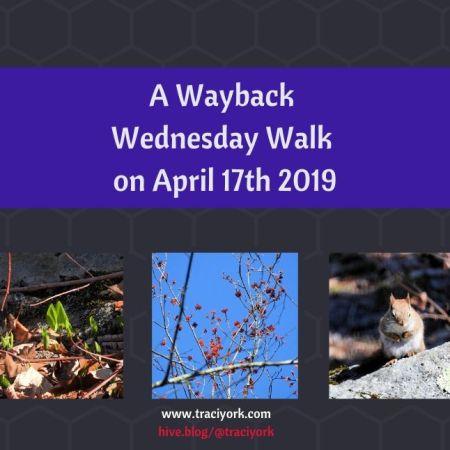 A Wayback Wednesday Walk on April 17th 2019 blog thumbnail